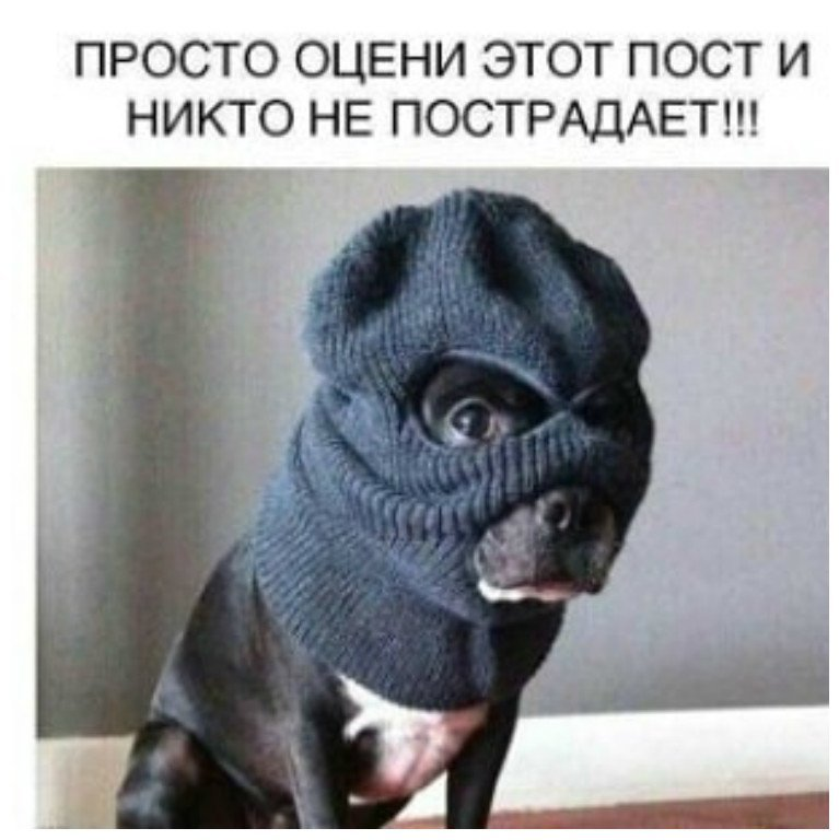 Ох, уж эти собаки, ох, уж эти собачники злая собака, смешное, собаки, собачники, юмор