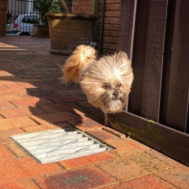 А-а-а, летающая безногая собака! необычно, неожиданно, нужный момент, увлекательно, удачные снимки, фото, фотографии, фотографы