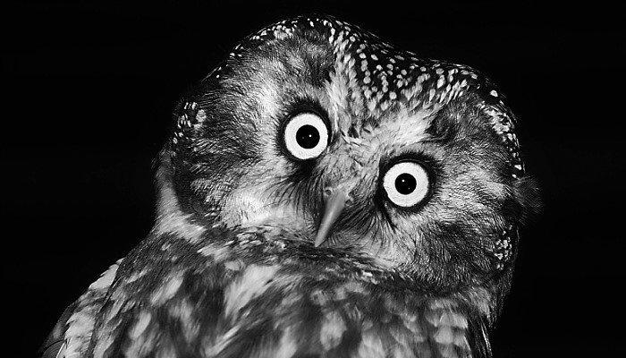 Глупая сова животные, заяц, птицы, синица, слоны, сова, факты