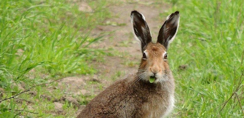 Смелый заяц животные, заяц, птицы, синица, слоны, сова, факты