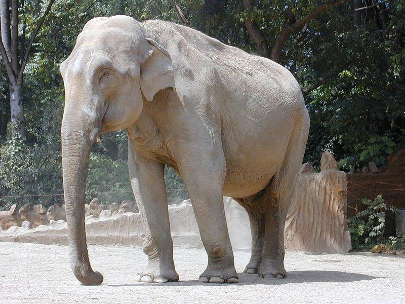 Слоновий страх животные, заяц, птицы, синица, слоны, сова, факты
