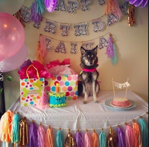 Собаки, которые живут лучше половины россиян животные, интересное, сладкая жизнь, собаки, фото, шик, юмор