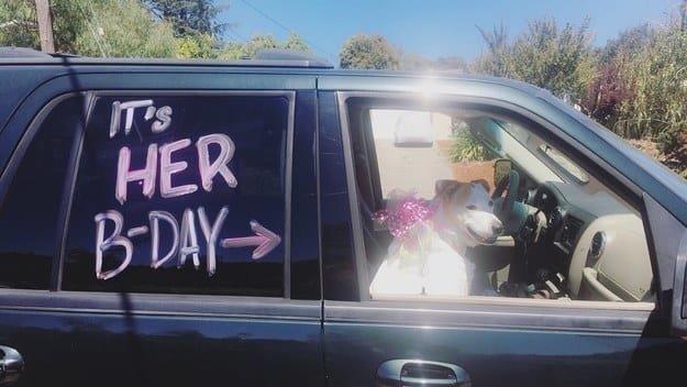 """Этот хозяин прокатил свою собаку в машине с надписью """"Сегодня у нее день рождения"""" животные, интересное, сладкая жизнь, собаки, фото, шик, юмор"""