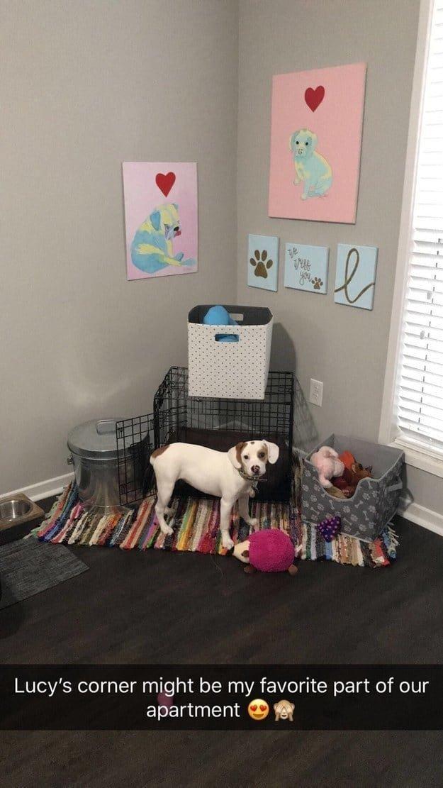 У Люси есть свой собственный уголок животные, интересное, сладкая жизнь, собаки, фото, шик, юмор