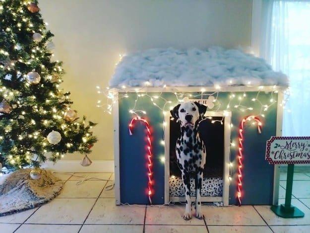 Владелец этого пса построил ему дом к Рождеству животные, интересное, сладкая жизнь, собаки, фото, шик, юмор
