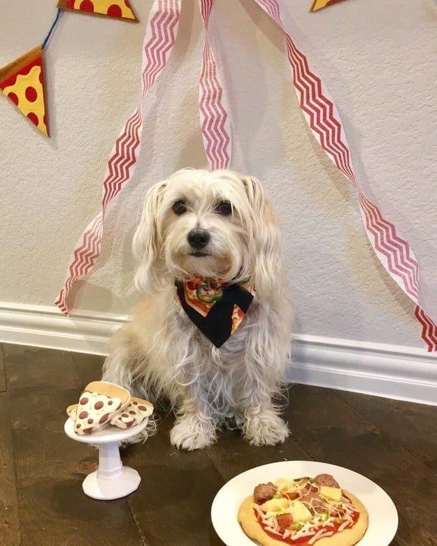 А у этих псов отличные вечеринки по случаю Дня рождения животные, интересное, сладкая жизнь, собаки, фото, шик, юмор