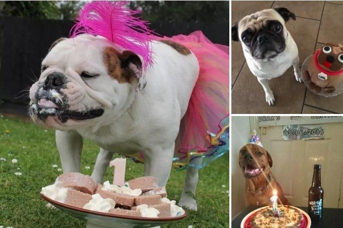 Посмотрите, сколько вкусняшек! животные, интересное, сладкая жизнь, собаки, фото, шик, юмор
