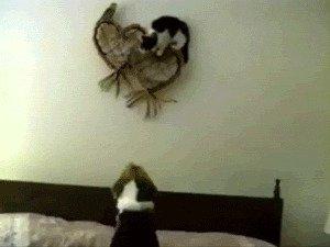 гифки, коты, кошки
