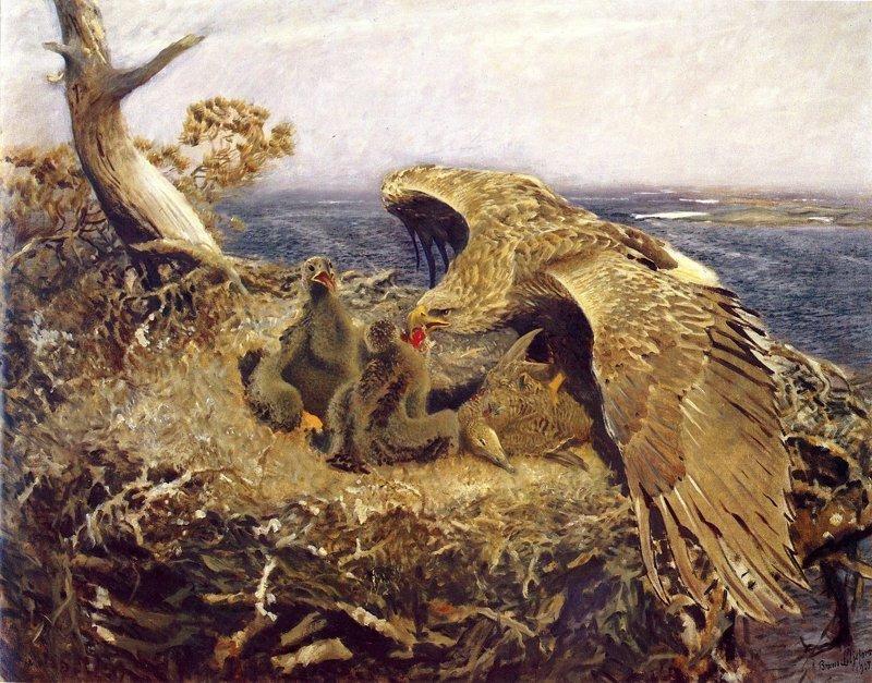 Автор: В. Жемчуг воспитание, гнездо, орлы, птицы, факты
