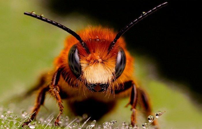 10. Ульи пчел войны, история, оружие