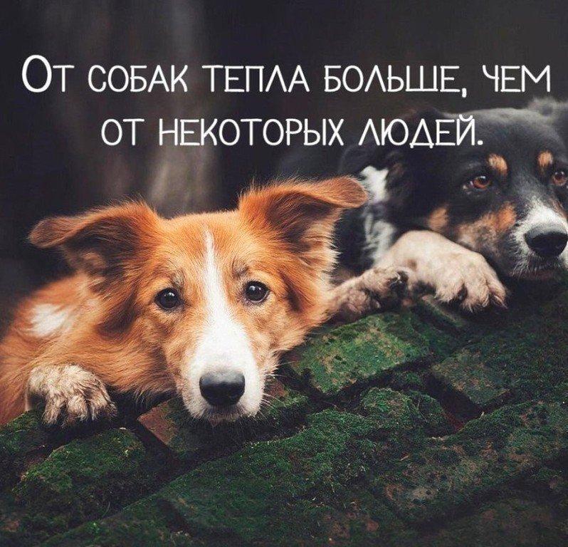 сока, выделяющегося картинки в цитатах животных так счастливы