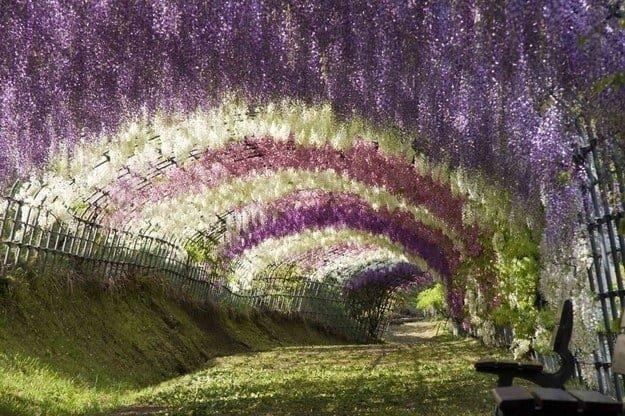 Отдохнуть на скамейке в тени этой цветущей арки следует разрешать лишь настоящим эстетам для перфекционистов, идеальное, интересно, необычно, необычные вещи, перфекционизм, совершенное, совершенство