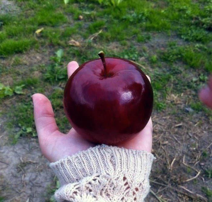 Яблочное совершенство для перфекционистов, идеальное, интересно, необычно, необычные вещи, перфекционизм, совершенное, совершенство