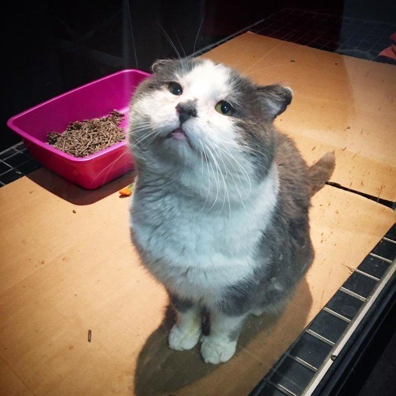 Кот бродяжничал несколько лет, но на седьмом году жизни его мечта о тёплом доме сбылась история, кошки, спасение