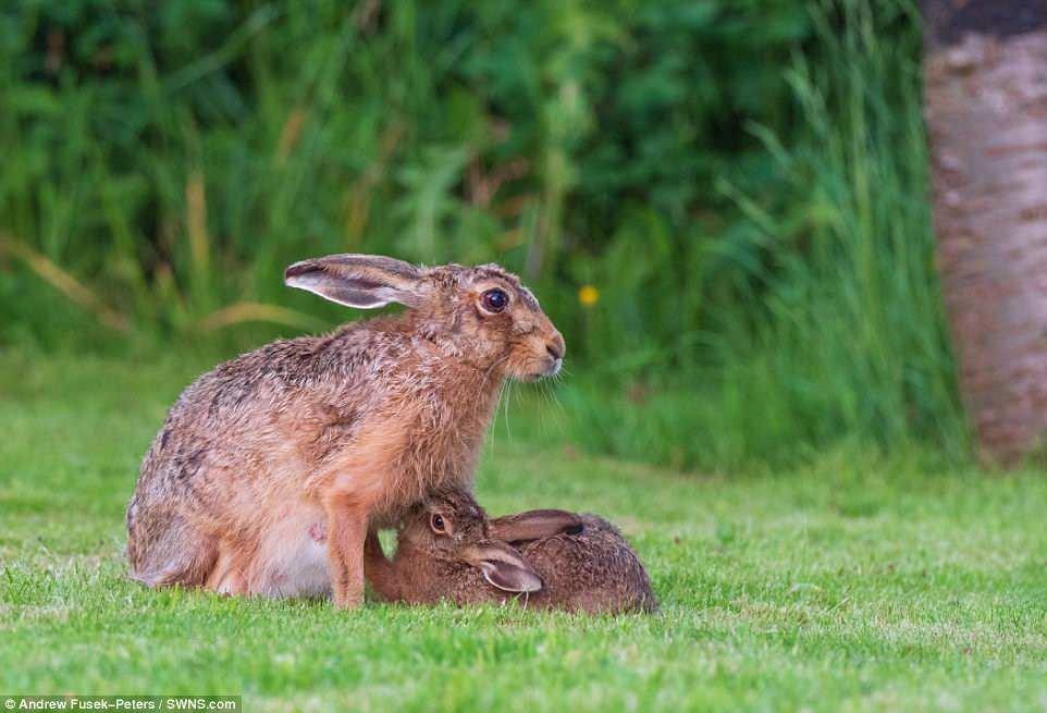 Картинка зайца и зайчат