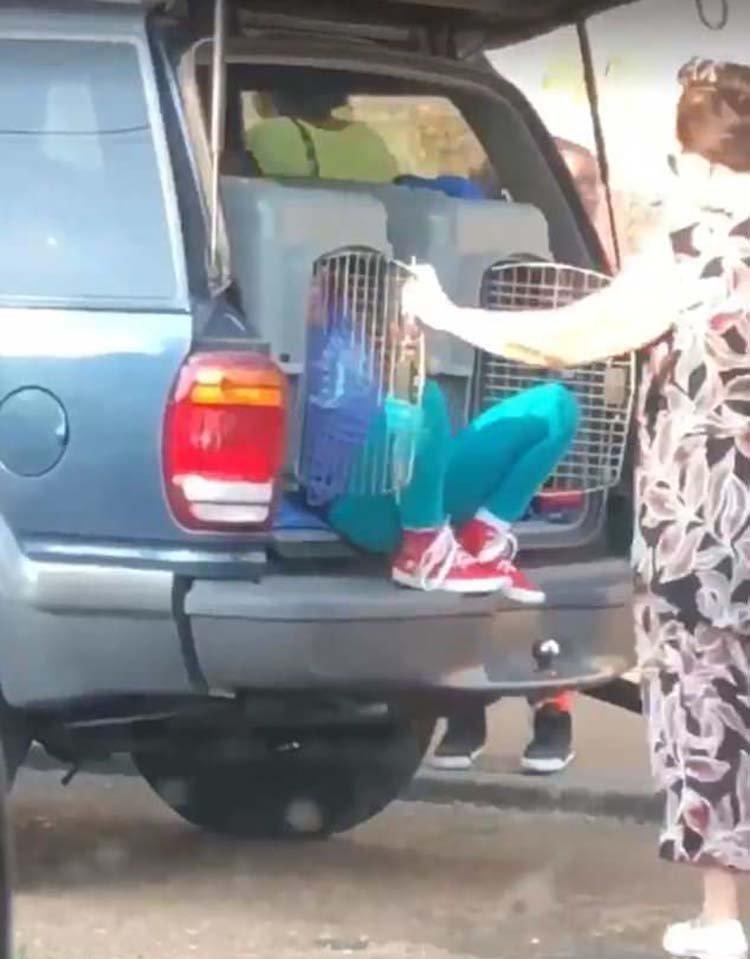 В США арестовали 62-летнюю женщину, которая перевозила своих внуков в собачьих клетках Leimome Cheeks, Леймом Чикс, Теннесси