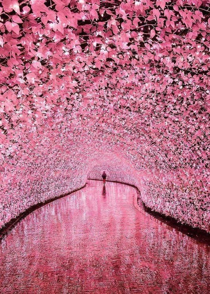 Сказочный туннель в Миэ, Япония в мире, вещи, красота, люди, природа, удивительно