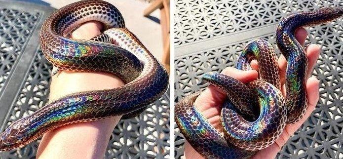 Так выглядит радужная змея в мире, вещи, красота, люди, природа, удивительно