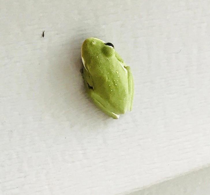 «Лягушонок с одним глазом пришел ко мне на крыльцо» в мире, вещи, красота, люди, природа, удивительно