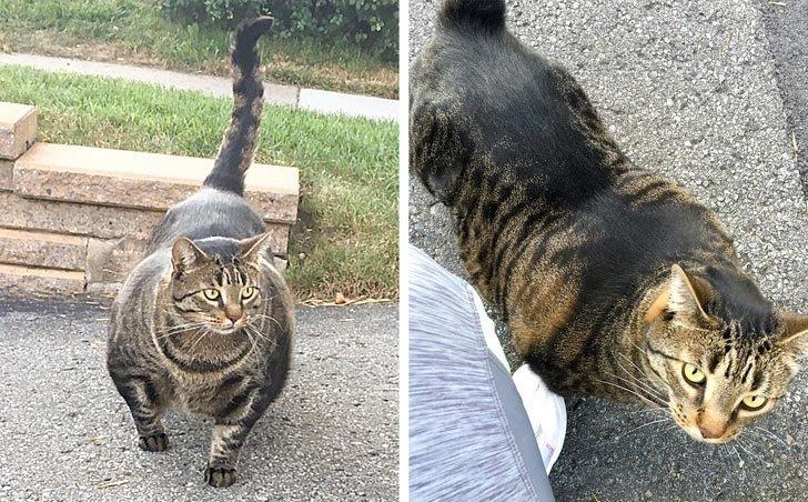 Кот, который накачался к лету лучше всех людей в мире, вещи, красота, люди, природа, удивительно