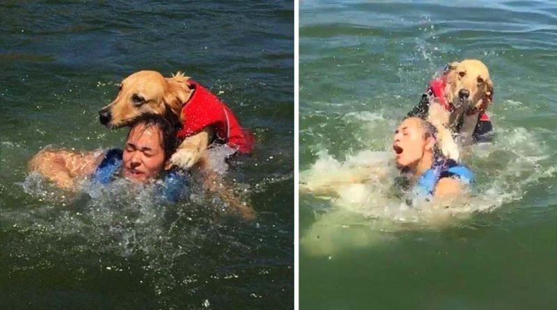 Собака чуть не утопила свою хозяйку в мире, животные, забавно, история, люди, прикол, собака