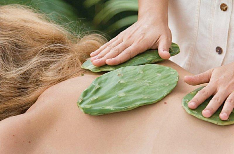 5. Массаж кактус направлен на улучшение кровотока, сок, выделяющийся во время массаж, в том числе увлажняет кожу косметология, кошмар, процедуры, спа-процедуры, тренды красоты, ужас, фото
