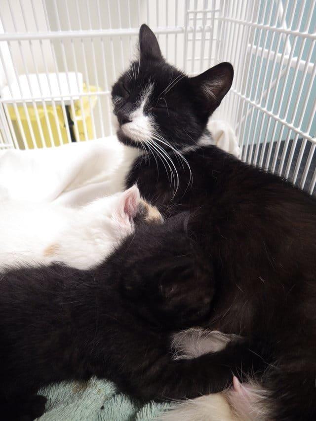 «Мимо магазина полз мусорный пакет…» история, кошки, спасение