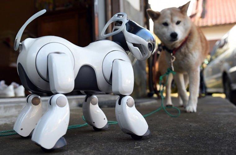 Забота о правах животных в мире. люди, животные, роботы, собака, япония