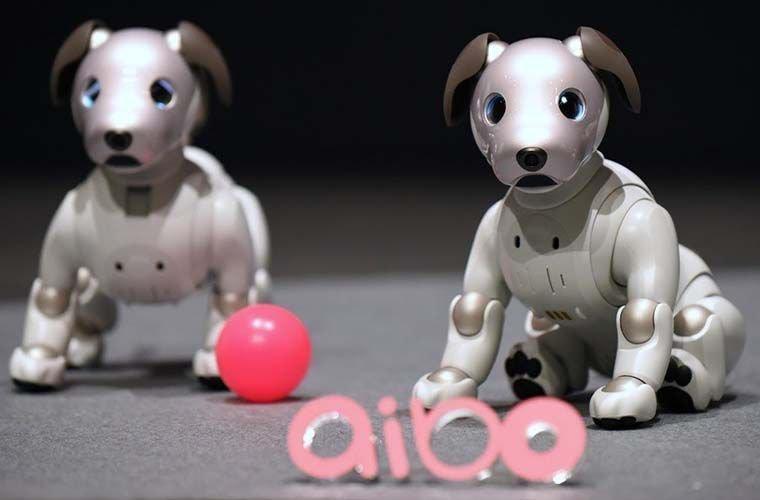 Самая первая в мире. люди, животные, роботы, собака, япония
