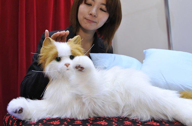 Почему в Японии популярны собаки-роботы в мире. люди, животные, роботы, собака, япония
