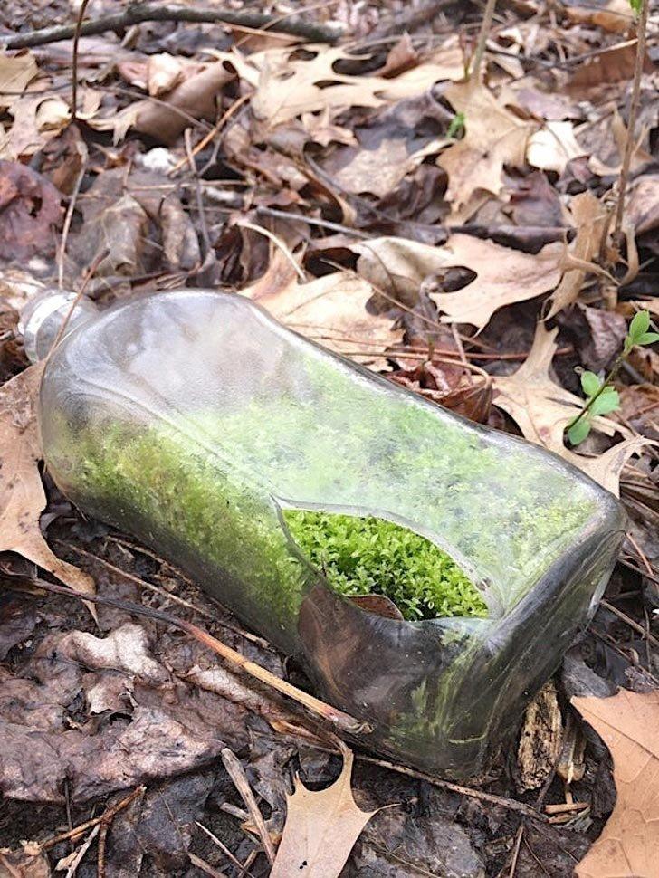 «Во время прогулки в лесу нашел вот такую бутылку с мхом» в мире, вещи, красота, люди, удивительно, что это такое