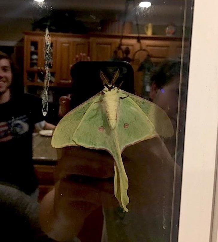 Огромная бабочка на окне в Южной Каролине в мире, вещи, красота, люди, удивительно, что это такое