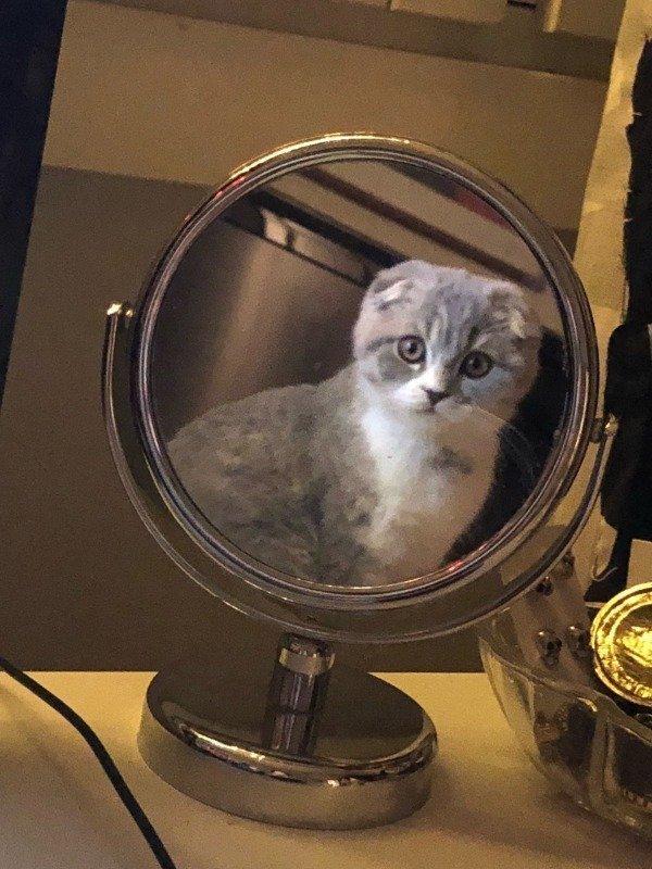 этого картинки кошка в зеркале экономичный простой