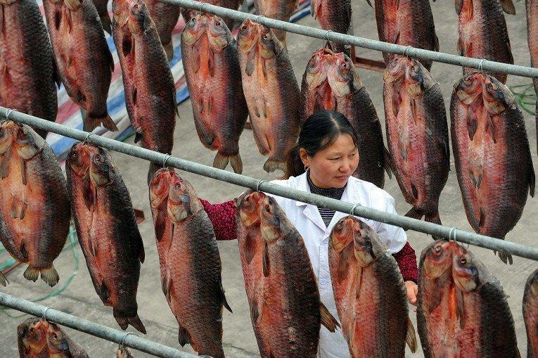17. Рыбный завод в Китае азия, заводы, индия, китай, масштабы, производство, фабрики китая, фото
