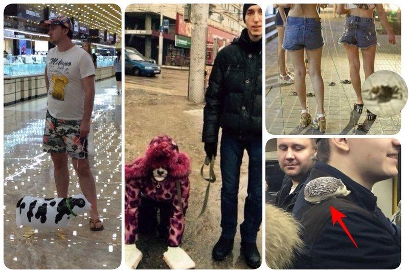 Даже из психбольниц иногда отпускают на прогулки идиоты, на поводке, питомцы, фото, фрики