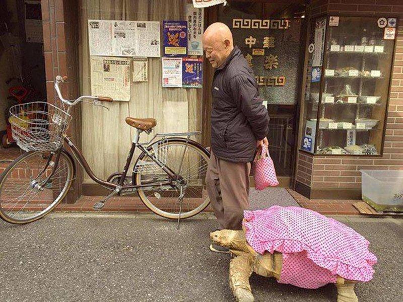 4. Житель Токио прогуливается со своей черепахой идиоты, на поводке, питомцы, фото, фрики