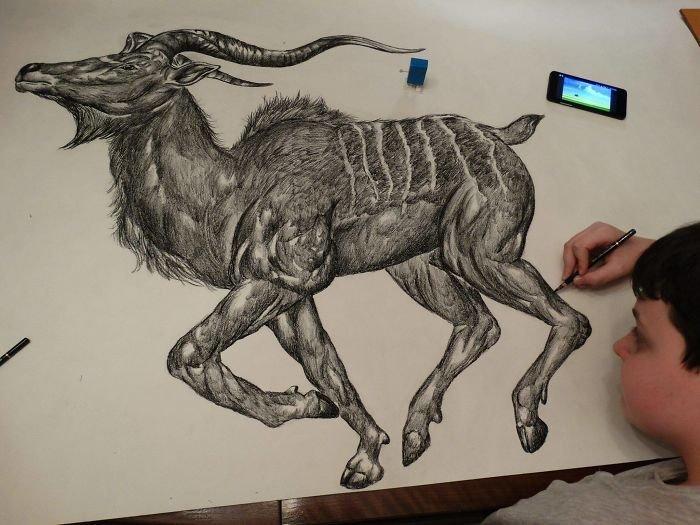 15-летний художник рисует животных с фотографической точностью Душан Кролица, анатомия, живопись, животные, икусство, как на фото, творчество, художник