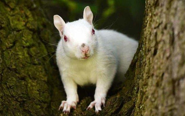 В Суррее замечена белка-альбинос альбинос, белки, великобритания, животные, необычно, необычный зверь, редкий вид, фотосвидетельство