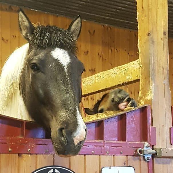Лошади - это одни из самых элегантных и величественных созданий на Земле... кроме особи на втором плане задний план, люди, прикол, умора, фото, юмор