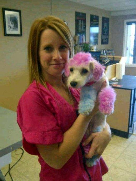 Женщина красит свою собаку в психоделические цвета, потому что, как она говорит, ей это нравится домашний питомец, животные, краска, мой хозяин идиот, окрас, собака