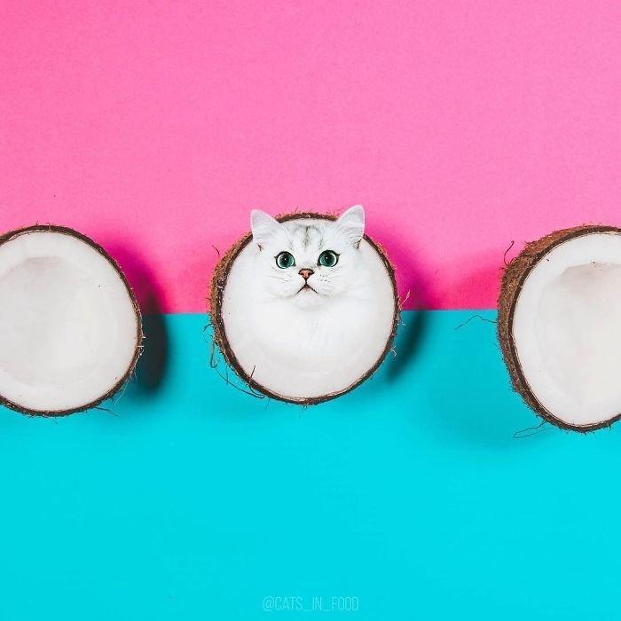 17. еда, инстаграмм, котики, котикиправятмиром, кошки, мимими, фотошоп, художница