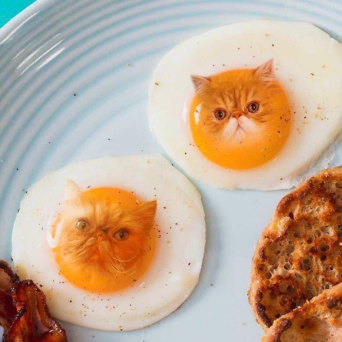 15. еда, инстаграмм, котики, котикиправятмиром, кошки, мимими, фотошоп, художница