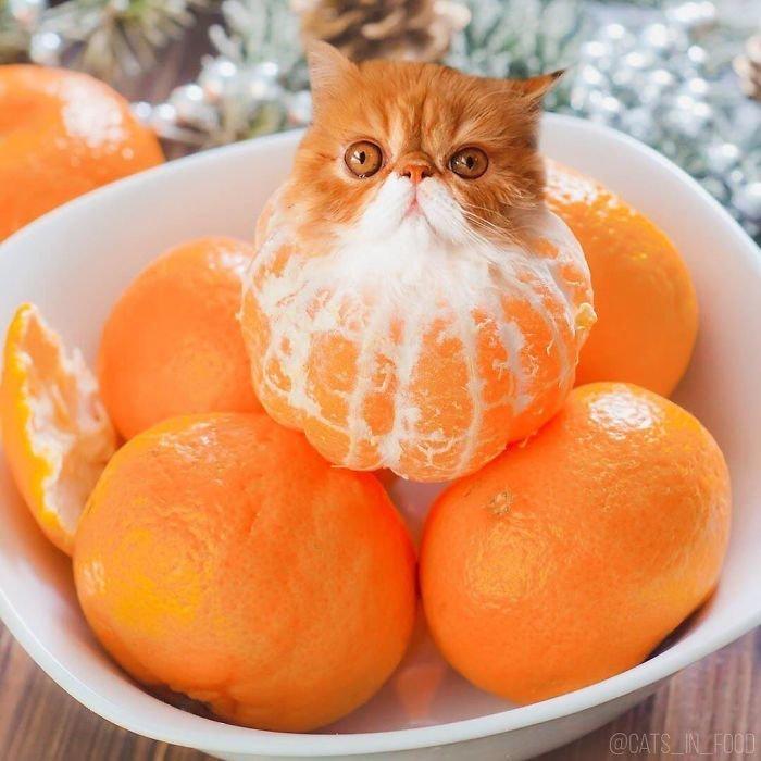 23. еда, инстаграмм, котики, котикиправятмиром, кошки, мимими, фотошоп, художница