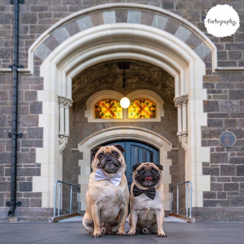11 фотографий о любви, наполненных глубоким смыслом Любовь, животные, настоящая любовь, свадебные фотографии, собаки, фотопроект