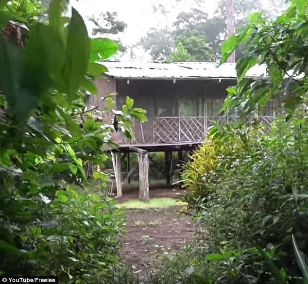 Вот этот домик блогер, блогерша, блогеры, вдали от людей, джунгли, единение, истории из жизни, природа