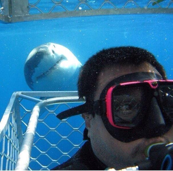 Акула тоже хочет сфоткаться Забавные фото, забавно, задний план, подборка, приколы, смешно, удачный момент, фото