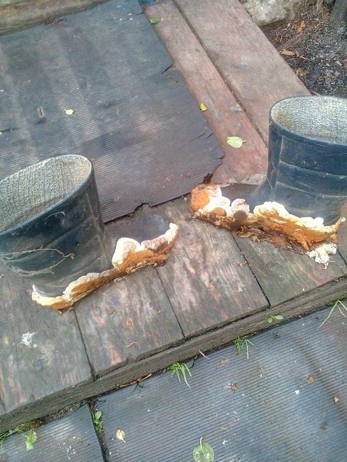 Грибы сами пришли к тебе fungo, grzyb, mushroom, грибы, грибы в необычных местах, тяга к жизни