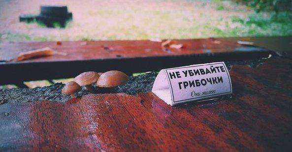 Неожиданно fungo, grzyb, mushroom, грибы, грибы в необычных местах, тяга к жизни