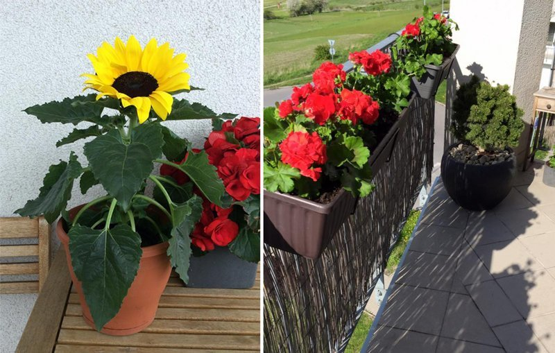Нескучный сад лето, огород, сад, терраса