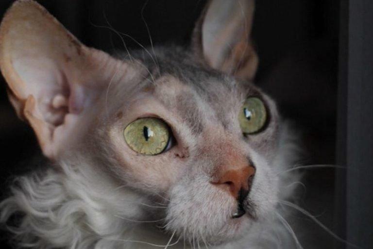 А потом кошка подросла и у нее выросла густая шерсть. Но не везде равномерно, а пятнами. И это пугало…    Симона, домашний питомец, животные, история, кошка, шерсть